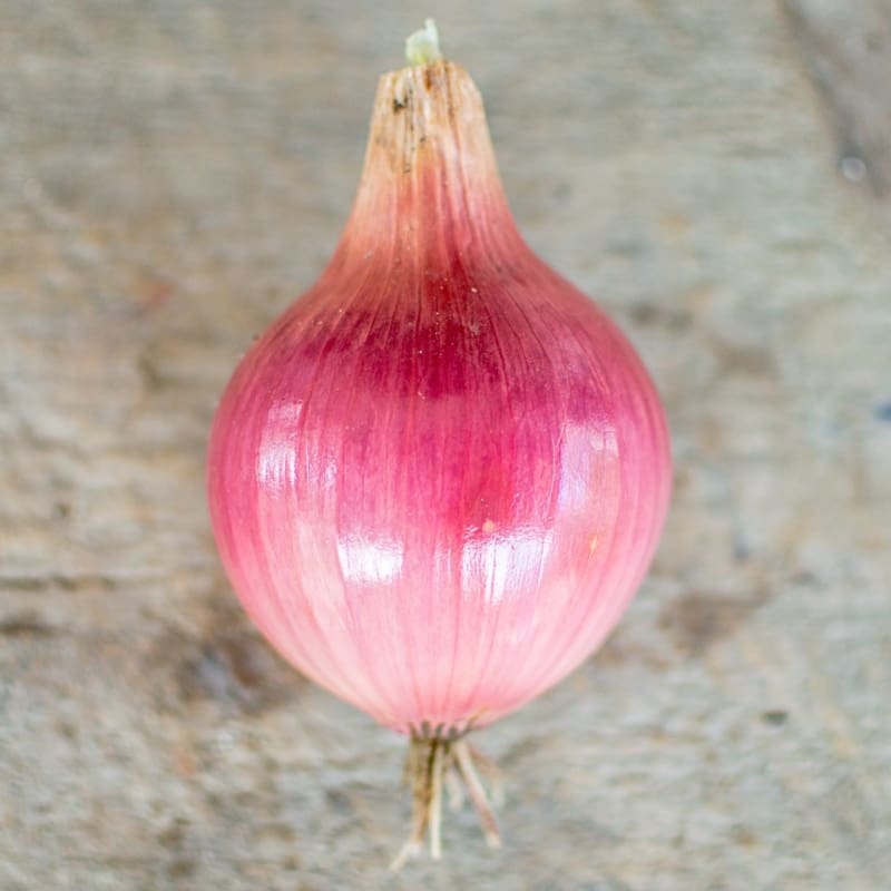 Blush Onion (F1 Hybrid 115 Days) - Vegetables