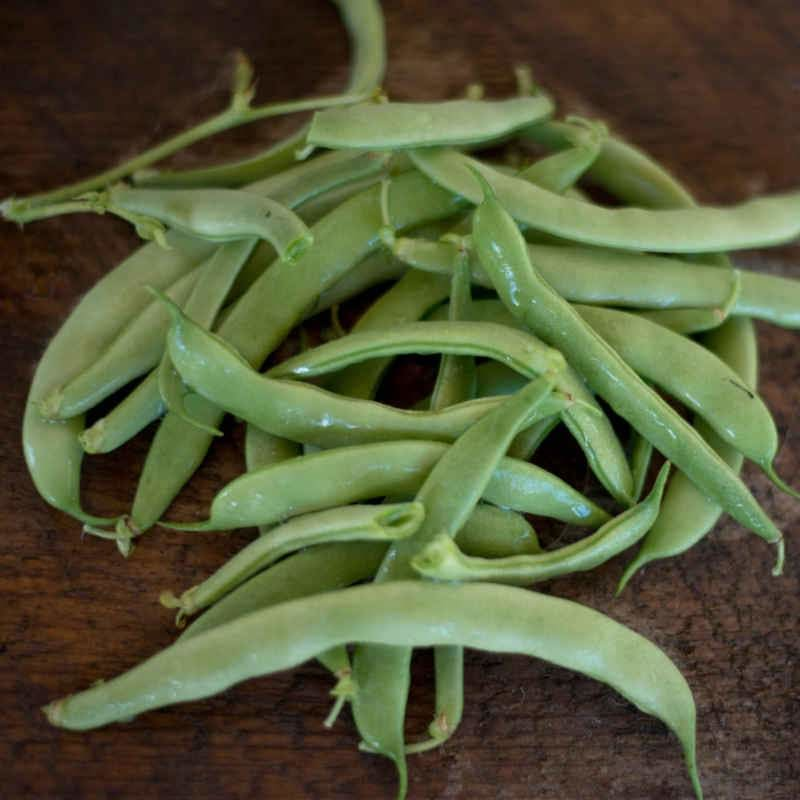 Bountiful Bush Bean (Heirloom 46 Days)
