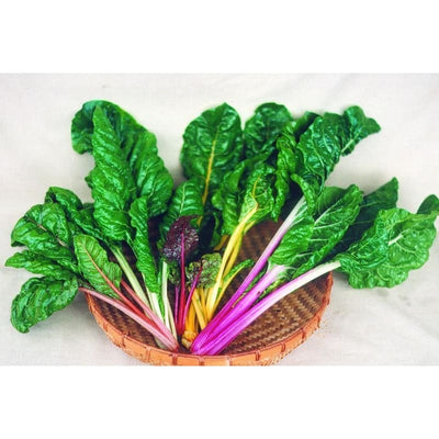 Bright Lights Swiss Chard (50 Days) - Vegetables