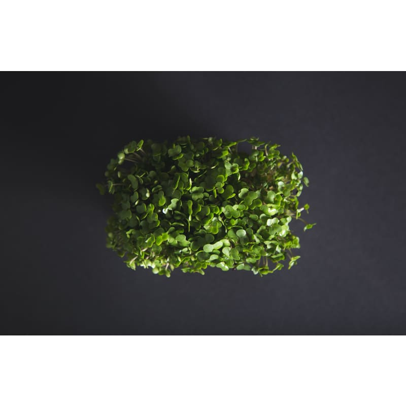 Broccoli Microgreens (1 oz)