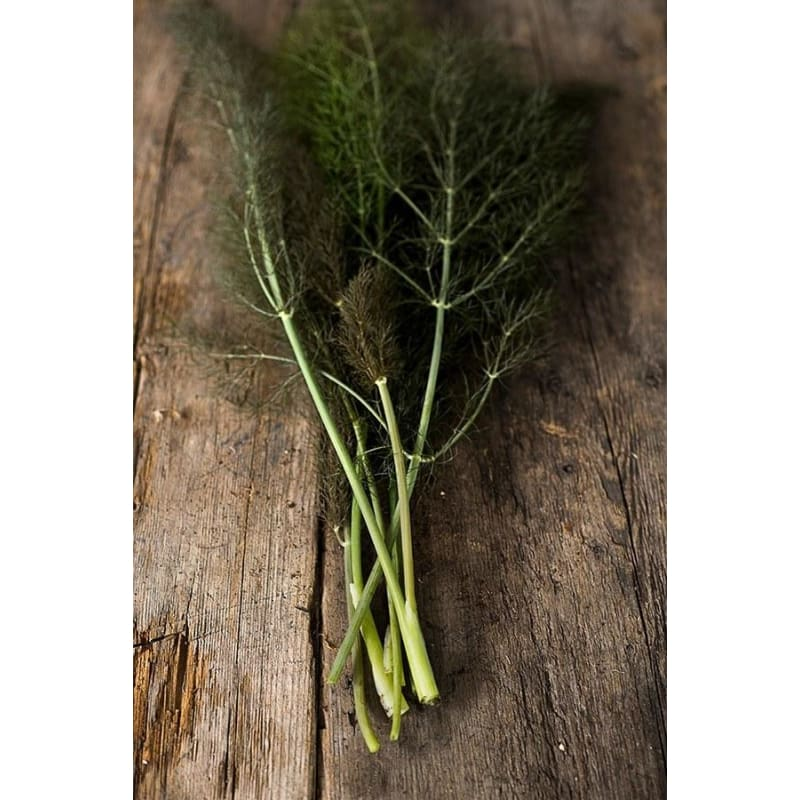 Bronze Fennel - Herbs