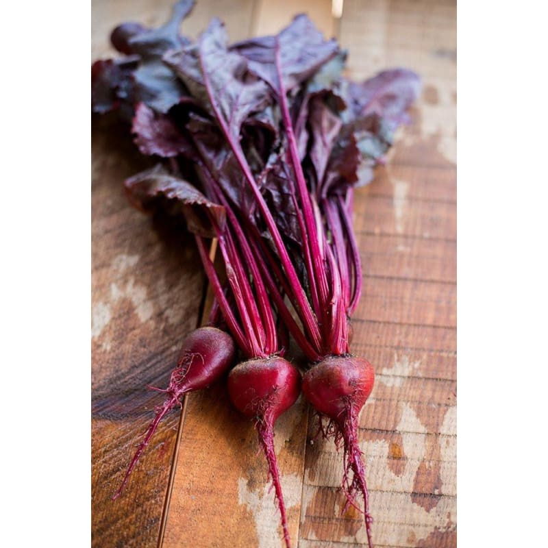 Bulls Blood Beet Microgreens (1oz)