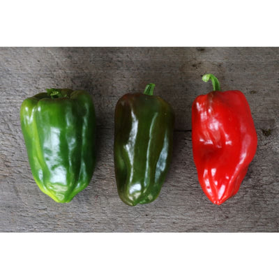 Buran Pepper (Heirloom 90 Days) - Vegetables