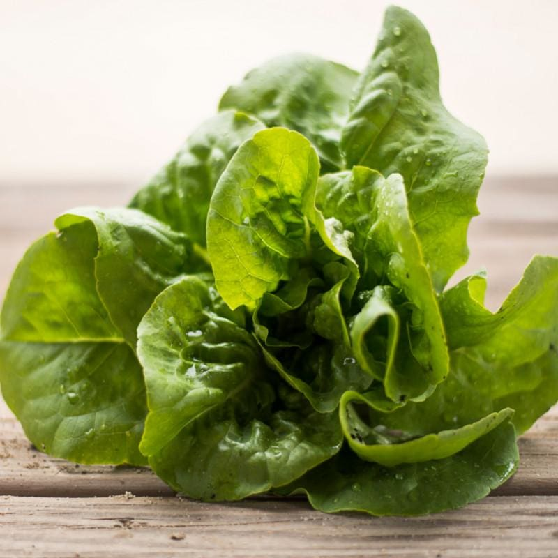 Buttercrunch Lettuce (53 Days) - Vegetables
