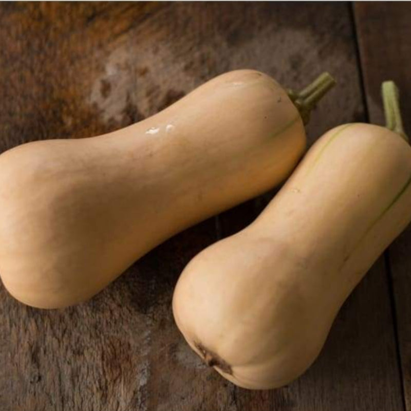 Butterscotch Winter Squash (F1 Hybrid 100 Days) - Vegetables