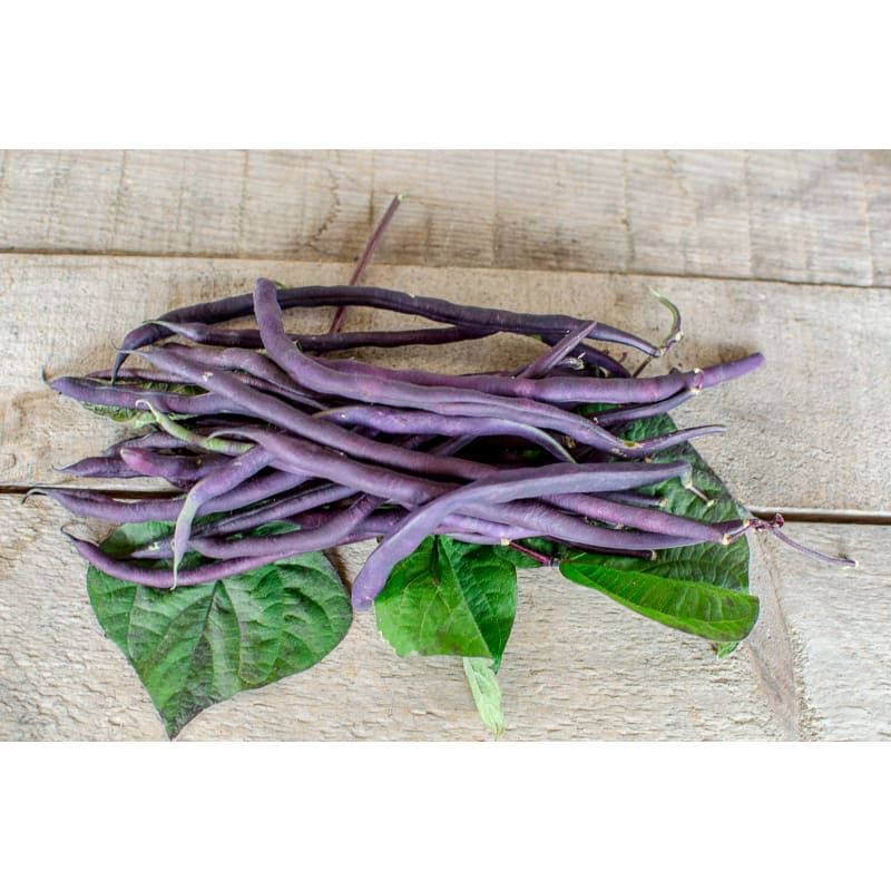 Carminat Pole Bean (56 DAYS)