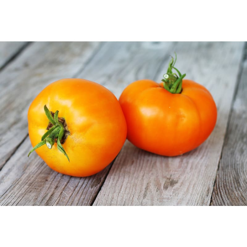 Chef's Choice Tomato (F1 Hybrid 75 Days)