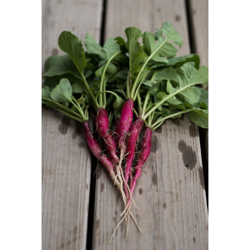 Cincinnati Market Radish (Heirloom, 30 Days)
