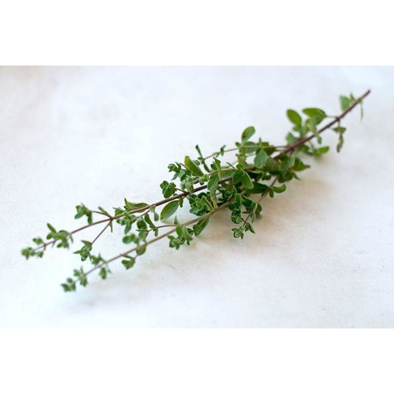 Common Thyme - Herbs