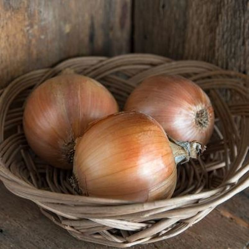 Cortland Onion (Organic F1 Hybrid 105 Days) - Vegetables