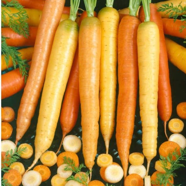 Culinary Blend Carrot (Organic, 60-70 Days)