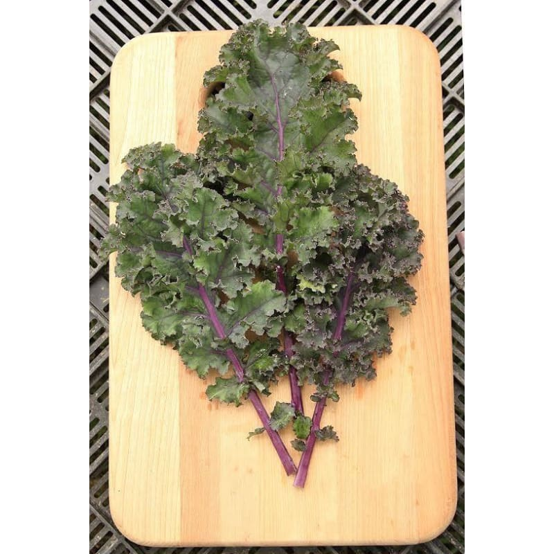 Curly Roja Kale Organic (55 Days) - Vegetables