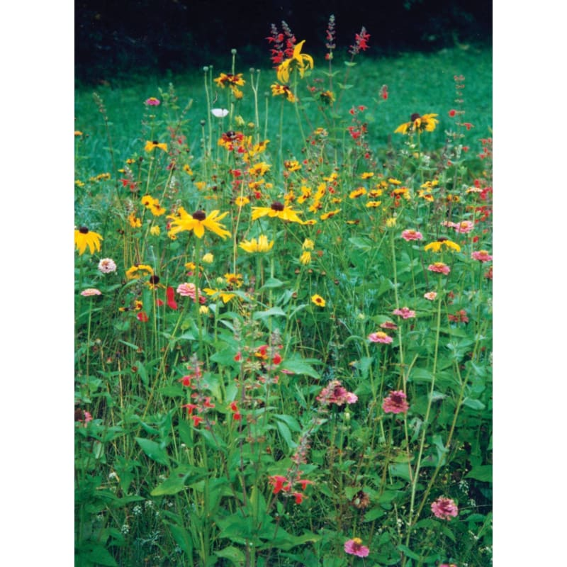 Deerproof Garden Flower Mix - Flowers