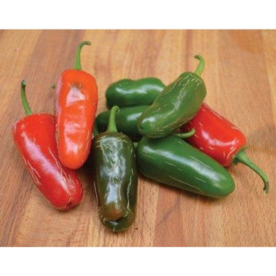 Early Jalapeno Hot Pepper (Heirloom 66 Days) - Vegetables