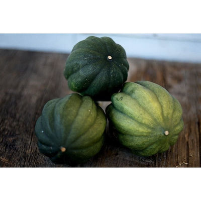 Ebony Acorn Squash (90 Days) - Vegetables