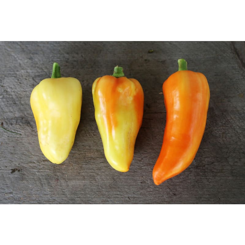 Feher Ozon Paprika Pepper (Heirloom, 70 Days)