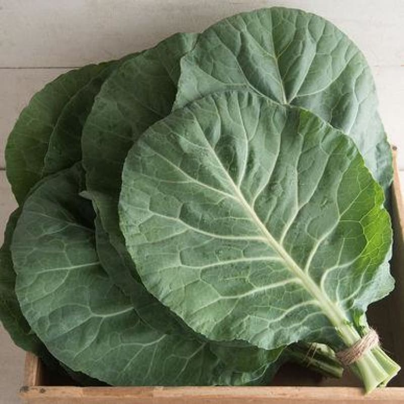 Flash Collards (F1 Hybrid 55 Days) - Vegetables