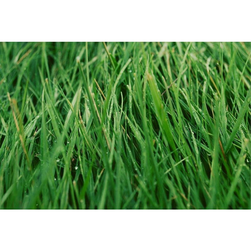 Fresh Cut Grass Fragrant Oil (1/8 Oz) (Discontinued) - Soapmaking Supplies