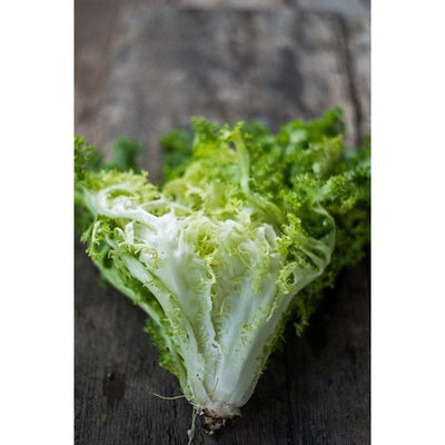 Frisee Endive (60 Days) - Vegetables