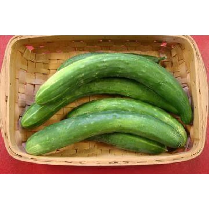 Garden Sweet Burpless Cucumber (F1 Hybrid 60 Days) - Vegetables