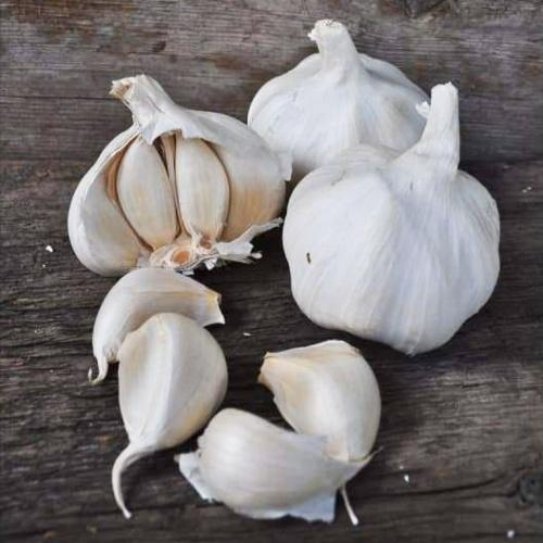 Garlic Domestic Soft Neck (Spring Planting)