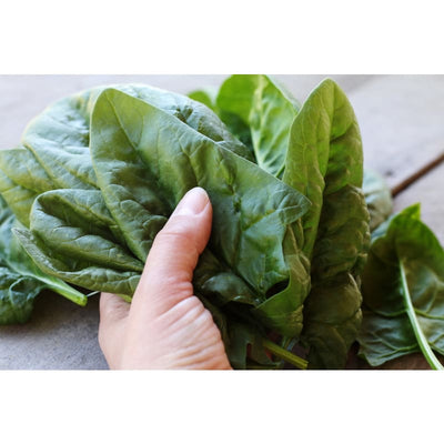 Giant Noble Spinach (Heirloom 46 Days) - Vegetables
