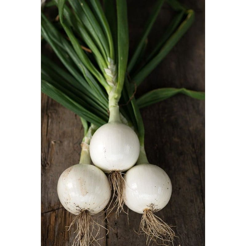 Gladstone Onion Organic (110 Days) - Vegetables