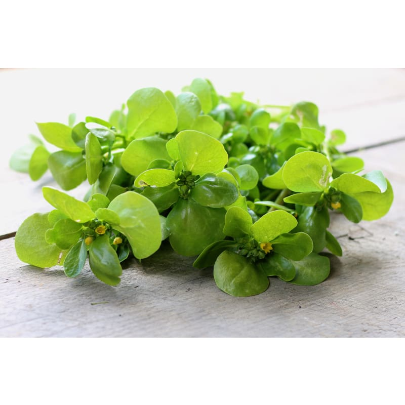 Goldgelber Purslane (50 Days) - Vegetables