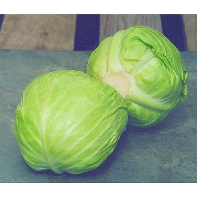 Gonzales Mini Cabbage (F1 Hybrid 55 Day) - Vegetables