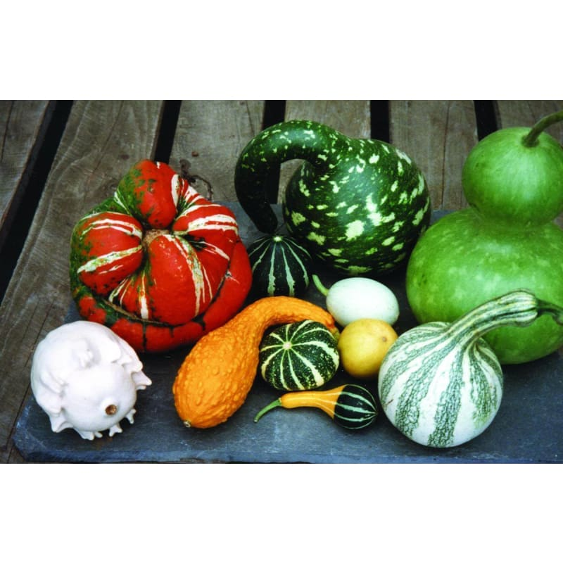 Gourd Mix (95-120 Days) - Vegetables