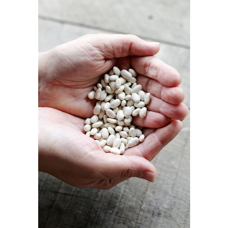 Great Northern Dried Bean (Heirloom 90 Days) - Vegetables
