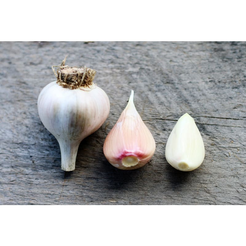 Hardneck Garlic - Georgian Crystal (Fall Planting)