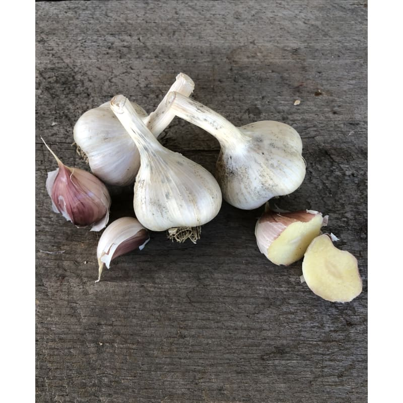 Hardneck Garlic- German Extra Hardy (Fall Planting)
