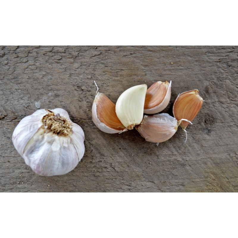 Hardneck Garlic - Russian Red (Fall Planting)