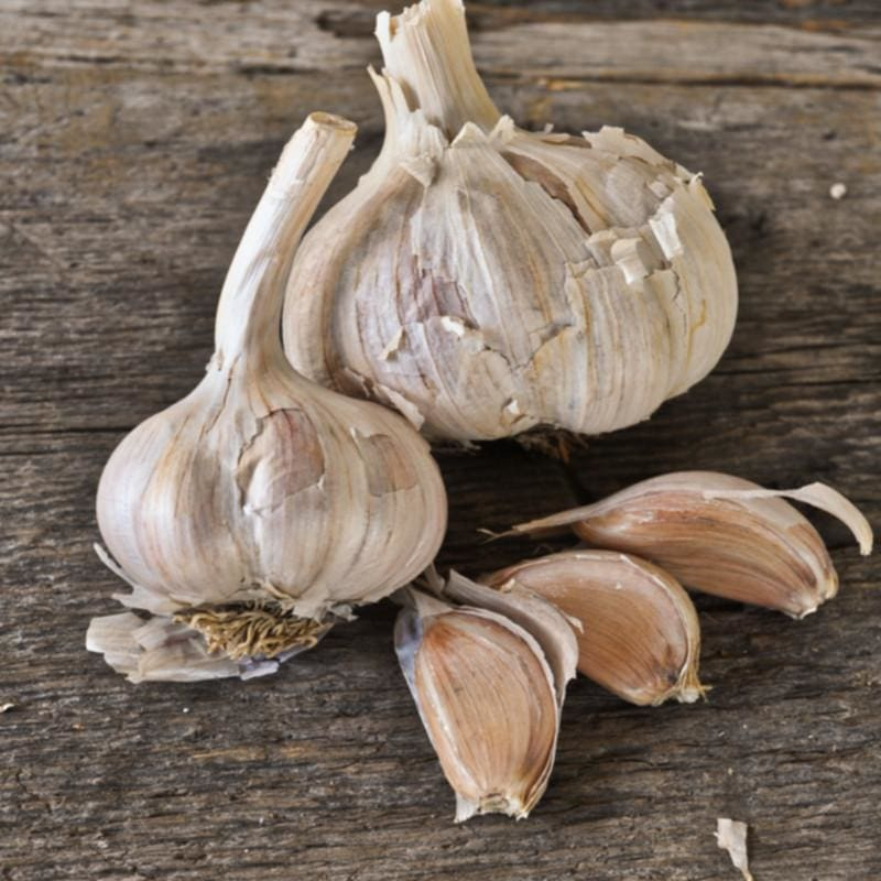 Hardneck Garlic - Spanish Roja (Fall Planting)