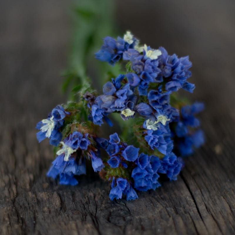Heavenly Blue Statice - Flowers