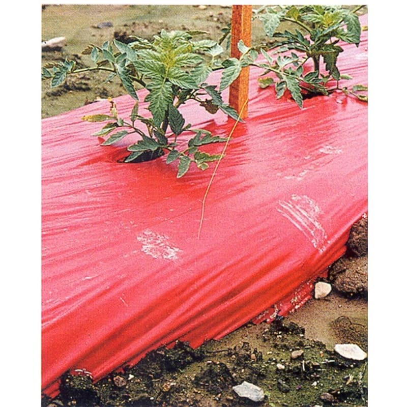 High Yield Tomato Mulch
