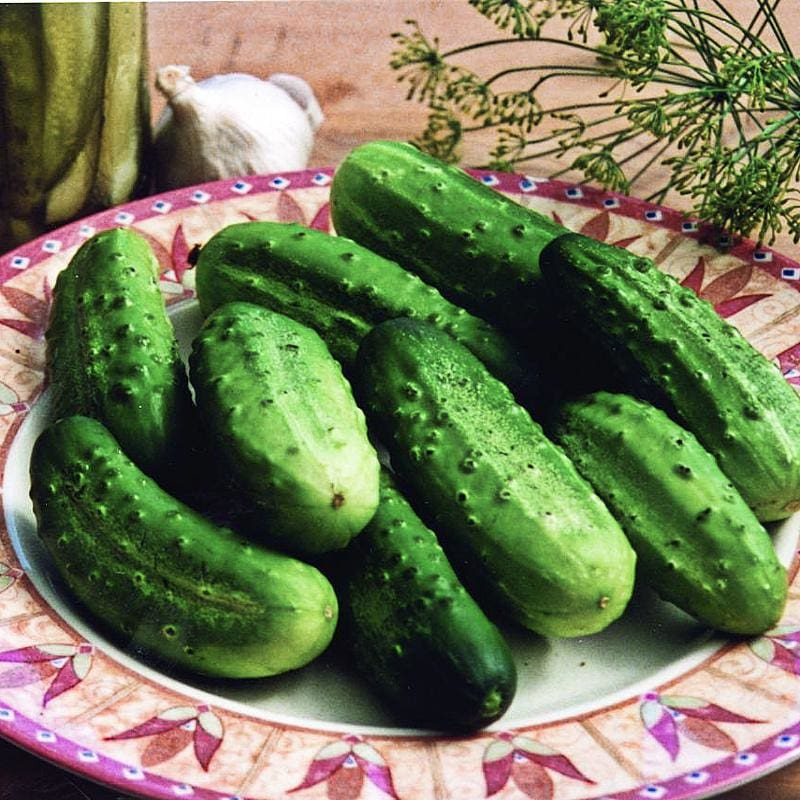 Homemade Pickles Cucumber (54 Days) - Vegetables