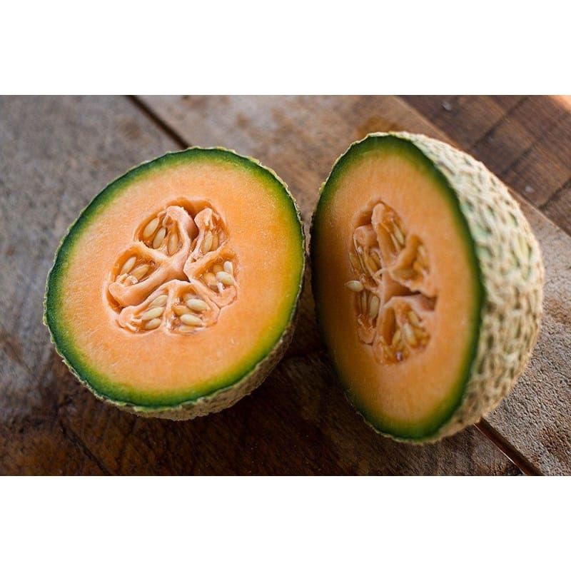 Honey Rock Melon (Heirloom 90 Days) - Vegetables