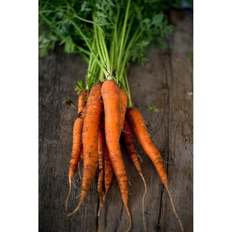 Imperator Carrot (Heirloom 70 Days) - Vegetables