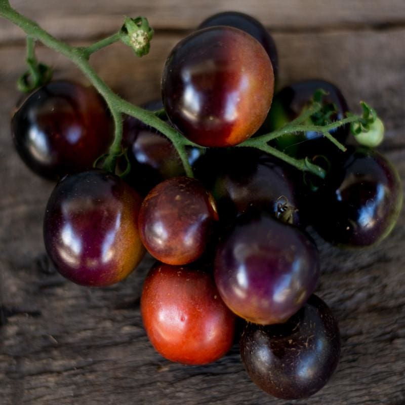 Indigo Rose Tomato (Organic 90 Days)