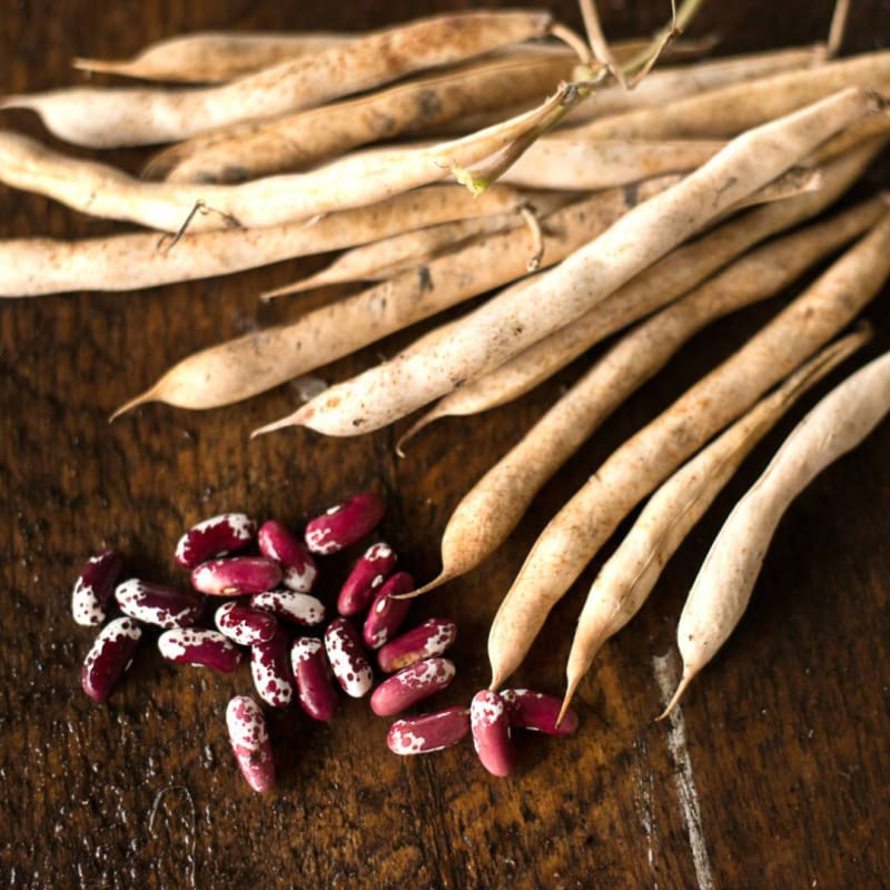 Jacobs Cattle Bush Dried Bean (Organic Heirloom 83 days) - Vegetables