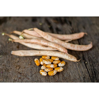 Jacobs Cattle Gold Bush Dried Bean (80 Days) - Vegetables