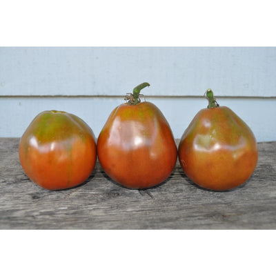 Japanese Black Trifele (Organic Heirloom 70-80 Days) - Vegetables