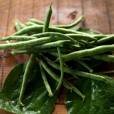 Kentucky Blue Pole Bean (62 Days) - Vegetables