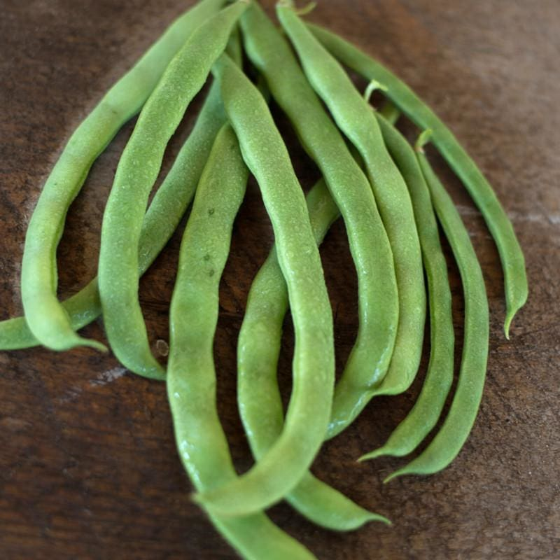 Kentucky Wonder Pole Bean (Heirloom 66 Days)