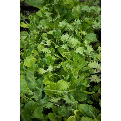 Kitchen Sink Greens Mix (1oz) - Vegetables