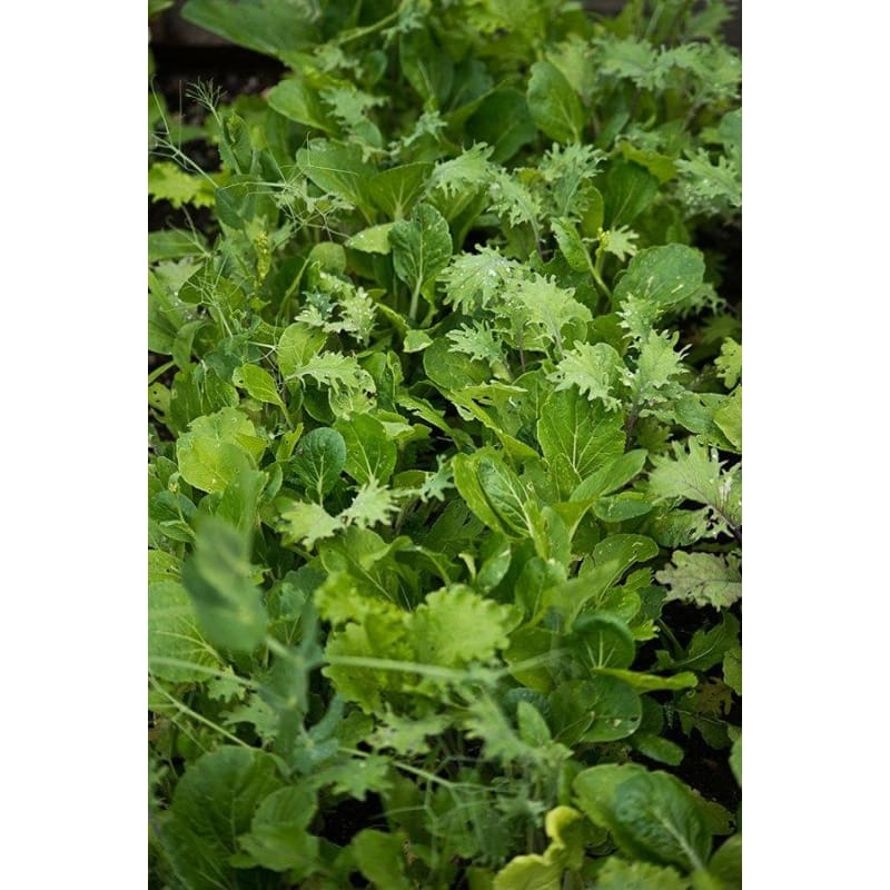 Kitchen Sink Greens Mix (1oz)