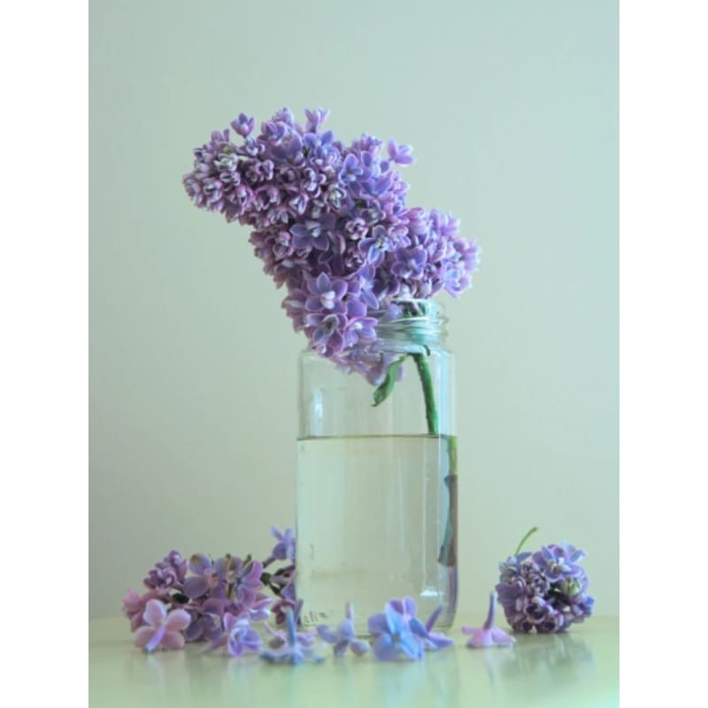 Lilac Fragrant Oil (5 ml) - Crafts