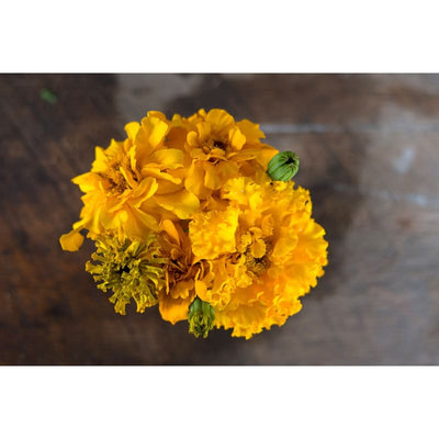 Marigold - Fruity Mix - Flowers